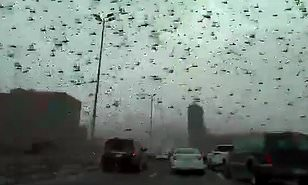 Locust Plague Spreads, Darkening the Sky over the Middle East