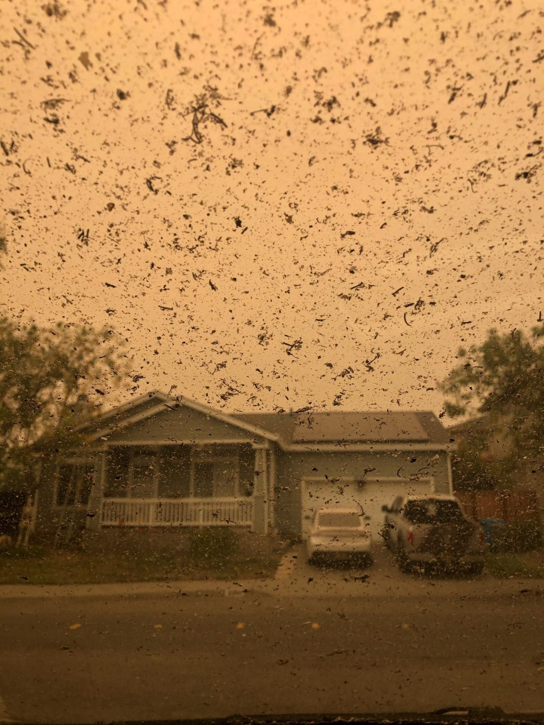 Massive Clusters of Ash Fall From the Sky in California