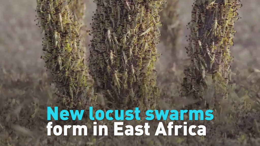 Locust Plague Hits Horn of Africa and Yemen